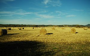 Monroe County, Tennessee - Hay bales in Tellico Plains