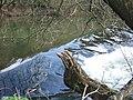 Head Weir, River Exe - geograph.org.uk - 372392.jpg