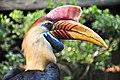 Helmhornvogel WVP2010.jpg