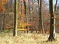 Henleyhill Wood - geograph.org.uk - 1055666.jpg