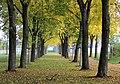 Herbst an der Max-Lademann-Straße, Halle (Saale) - panoramio (7).jpg