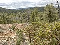 Highline Trail, Payson, Arizona - panoramio (31).jpg