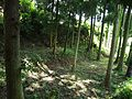 Hikida Castle Stone Wall.jpg