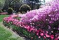 Hillwood Gardens in April (17410175320).jpg