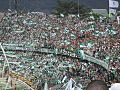 Hinchada Atletico Nacional de Medellín.jpg