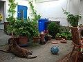 Hinterhofidylle mit Hund - panoramio.jpg