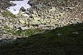 Hirsche fürstkar 1225 13-07-13.JPG