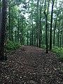 Holly Springs National Forest 2018 1.jpg