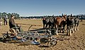 Horse Ploughing Teamwork (10283634354).jpg