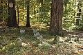 Hundegräber im Wald bei Aichwald-Lobenrot - panoramio.jpg