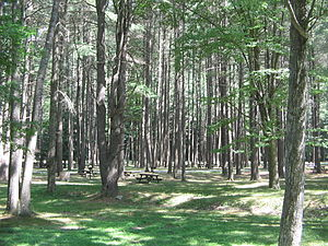 Hyner Run State Park - A picnic area at Hyner Run State Park