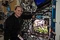 ISS-64 Kate Rubins checks out radish plants (1).jpg