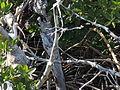 Ibis-GulfCoastVisitorCenter-EvergladesNationalPark.JPG