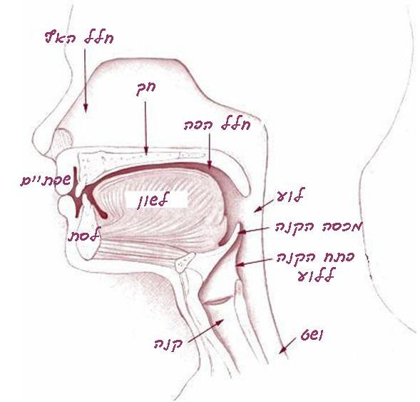 Illu01 head neck - hebrew