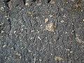 Impact breccia (Sandcherry Member, Onaping Formation, Paleoproterozoic, 1.85 Ga; High Falls roadcut, Sudbury Impact Structure, Ontario, Canada) 42 (47707286762).jpg