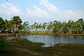 India - TN - 11-01 - The Farm - 17 - ponds (5445434964).jpg