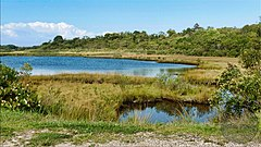 Indian Fields Montauk Big Reed Nature Trail.jpg