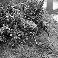 Infantry of the 2nd Battalion, South Wales Borderers hide themselves in a laurel bush during a brigade exercise near Ballymena in Northern Ireland, 19 September 1941. H14064.jpg