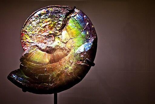 Iridescent Ammonite Fossil