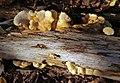 Iso-Urtti fungi.jpg