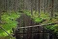 Isojärvi National Park - stream 2.jpg