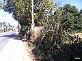 Itupeva - SP - panoramio (1114).jpg