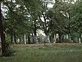 Jüdischer Friedhof Rechnitz.jpg
