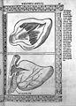 Jacopo Berengarius da Carpi, Isagoge breves Wellcome L0031347.jpg