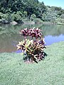 Jardim Santo Antônio, Goiânia - GO, Brazil - panoramio (1).jpg