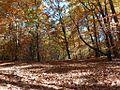 Jesień - panoramio (1).jpg