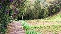 Jianshi Lavender Cattage 尖石薰衣草森林 - panoramio.jpg