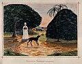 John Edmund Taylor, Botanical Gardens. Singapore. (1879, Wellcome V0037482).jpg