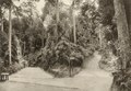 KITLV - 80043 - Kleingrothe, C.J. - Medan - Road at the Crag Hotel in Penang - circa 1910.tif