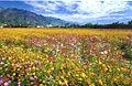 Kaohsiung County scenic photo 2.jpg