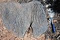 Karren weathering (Wirrapowie Limestone, Lower Cambrian; Mernmerna railroad bridge dry creek cut, South Australia) 2.jpg