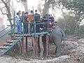 Kaziranga National Park, Assam, India 02.jpg