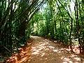 Khao Sok, 2014 December - panoramio (35).jpg