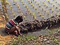 Kids of Bangladesh.jpg