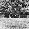 kievitslaan nabij nr. 114, begraafplaats familie groeninx van zoelen, overzicht - bolnes - 20037318 - rce