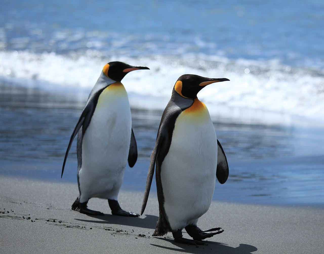 King Size Penguin Pattern Bedding