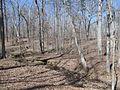 Kings Mountain National Military Park - South Carolina (8558883588) (2).jpg