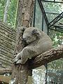 Koala CMZ.jpg