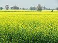 Kosli, Haryana 123302, India - panoramio (9).jpg