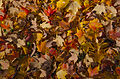 L'automne au Québec (8072348867).jpg
