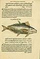 L'histoire naturelle des estranges poissons marins (Page 14) (5998937590).jpg