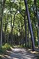 LSG Kühlung - Nienhäger Holz (Gespensterwald) (146).jpg
