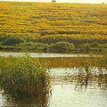 Lake next Bacioi (1980). (21412436705).jpg