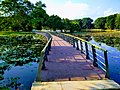 Landscape at Cyberjaya Lake Gardens.jpg
