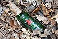 Landschaftsschutzgebiet Vorholzer Bergland - Wenser Berg - Alte Flasche.JPG