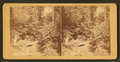 Landsdown rustic bridge, by R. Newell & Sons.png